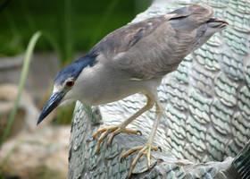 Lormet-birds-0504sml by Lormet-Images