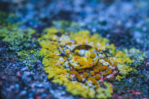lichen by MarcosRodriguez
