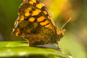 butterfly by MarcosRodriguez