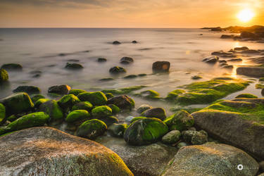 green over rock by MarcosRodriguez