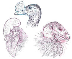 Fowl Studies by Smnt2000