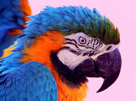 Pretty Polly by shadowmaster