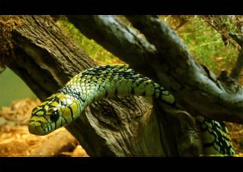 Slither by tiger-kat