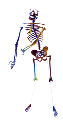 Body Crane22 by Graindolium