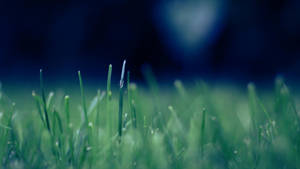 Grass with 50mm by suicidecrew