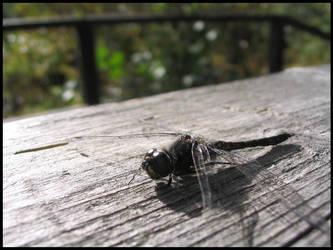 Dragonfly by Ed-Die