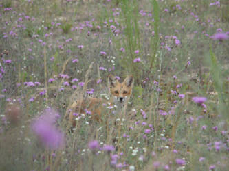 Flowered Fox by 22sx