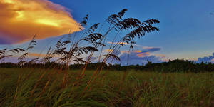 The Sea Oats by Matthew-Beziat