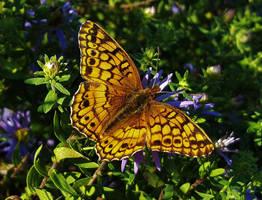 Patuxent Butterfly by Matthew-Beziat