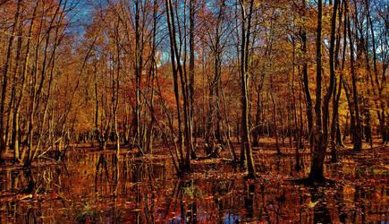 Wood Duck Pond Flooded Forest 2018 by Matthew-Beziat
