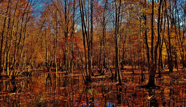 Wood Duck Pond Flooded Forest 2018 by Matthew-Beziat