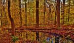 Patuxent Autumn Scene 2018 by Matthew-Beziat