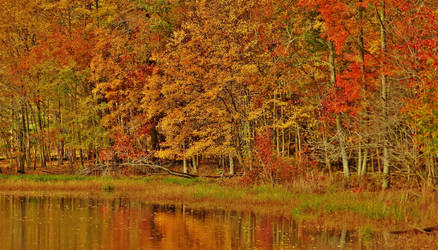 Autumn Reflections At Goose Pond 2018 by Matthew-Beziat