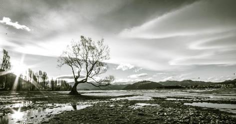 Tree of Wanaka by samshadows