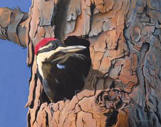 Watchful Woodpecker by xfkirsten