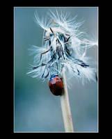 Lady bug by DG-Photo