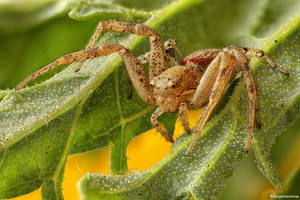 Spider II by SBartek