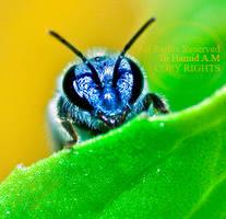 Peek-A-Bee by Deeevilish