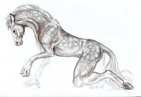 Dappled grey by Wolfsjal