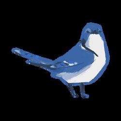 Blue Jay - Little bird 6/6 by MrsFaithlessness