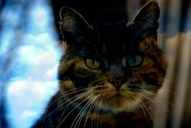 Her cat. by evadrias