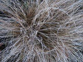 Puffy Grass Texture 1 by SerendipityStock
