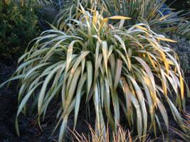 Fluffy Grass Texture 2 by SerendipityStock