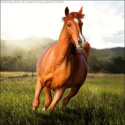 HEE Avatar - Premade Chestnut Horse in Field by LeoLuminescense