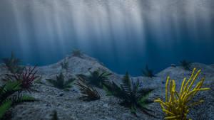 UNDER THE SEA by NIKOMEDIA