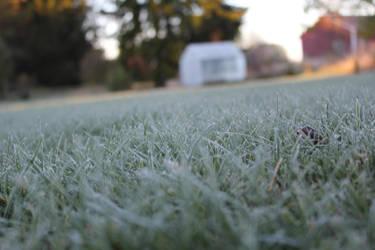 frosty grass by FinrandoInu