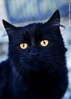 black magicat by luez2
