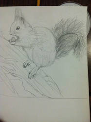 Red Squirrel Sketch - Side View by BurtanTae