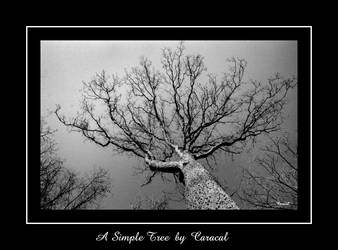 Arbre in the sky by caracal