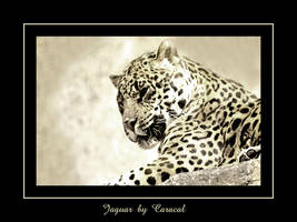 Jaguar In BW by caracal