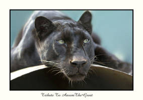 Tribute To AnsemTheGreat by caracal