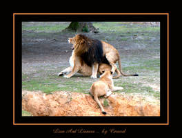Lion And Lioness by caracal