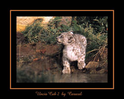 Uncia Cub 2 by caracal