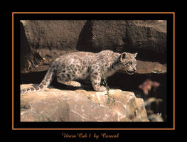 Uncia Cub 3 by caracal