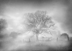 Misty Tree by Scabeater