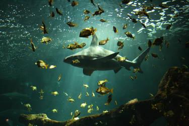 42 requins et demi by bebeshlook