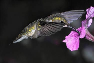Nectar Break by papatheo