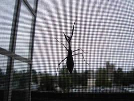 Ginor-mantis by itsayskeds