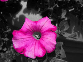 Magenta Flower by itsayskeds