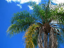 Palm and Sky by itsayskeds