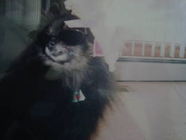 Pomeranian Model by itsayskeds