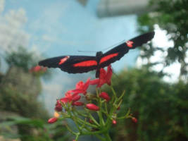 Butterfly Four by itsayskeds