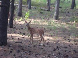 Single Deer by itsayskeds