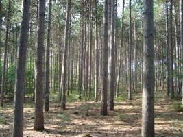 Woods by itsayskeds