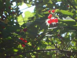 Brightberry by itsayskeds