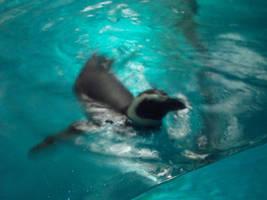 Penguin Three by itsayskeds